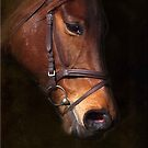 Thoroughbred Mare by Bine