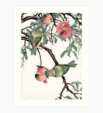 Pomegranate and Lovebirds Art Print