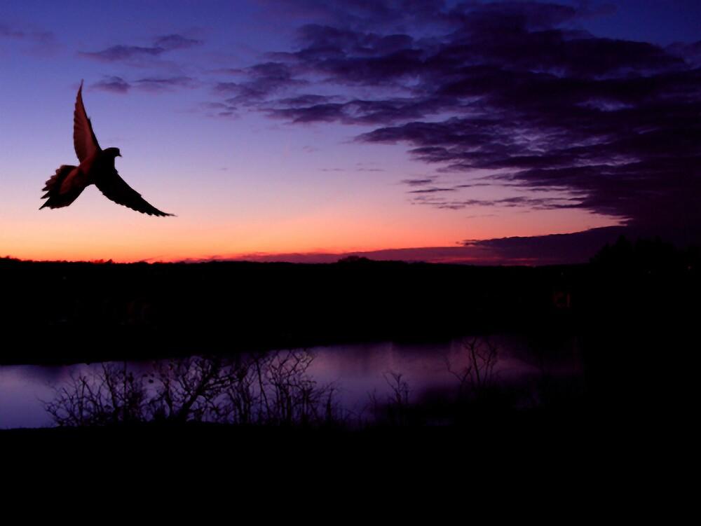 Dove In Flight At Sunset by Kenneth Krolikowski