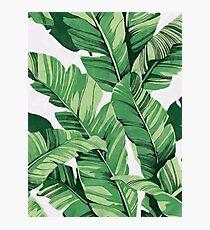 Tropical banana leaves III Photographic Print