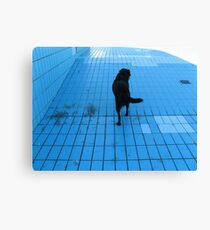 DOG IN THE POOL  Canvas Print