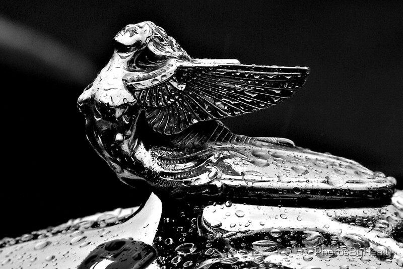 Hood Ornament - 1932 Plymouth - B&W by Photos by Healy