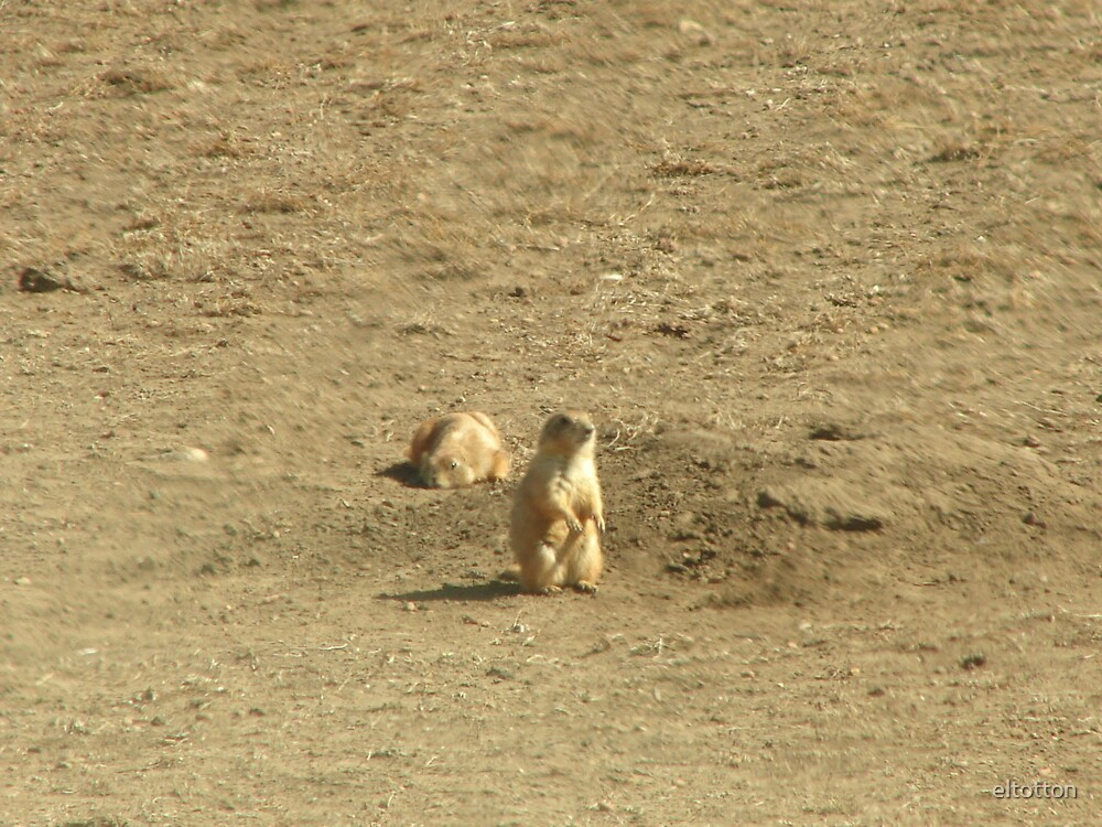Prairie Dogs Wind Cave National Park by eltotton