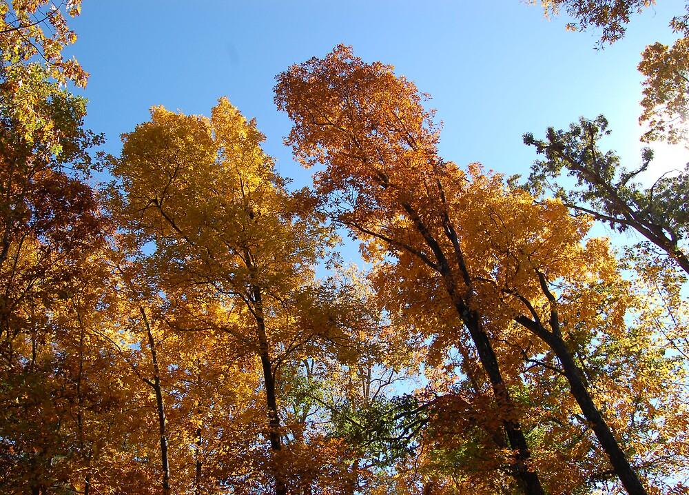 Autmn Leaves by KnockKnockPhoto