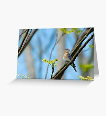 Pretty Little Lady Greeting Card