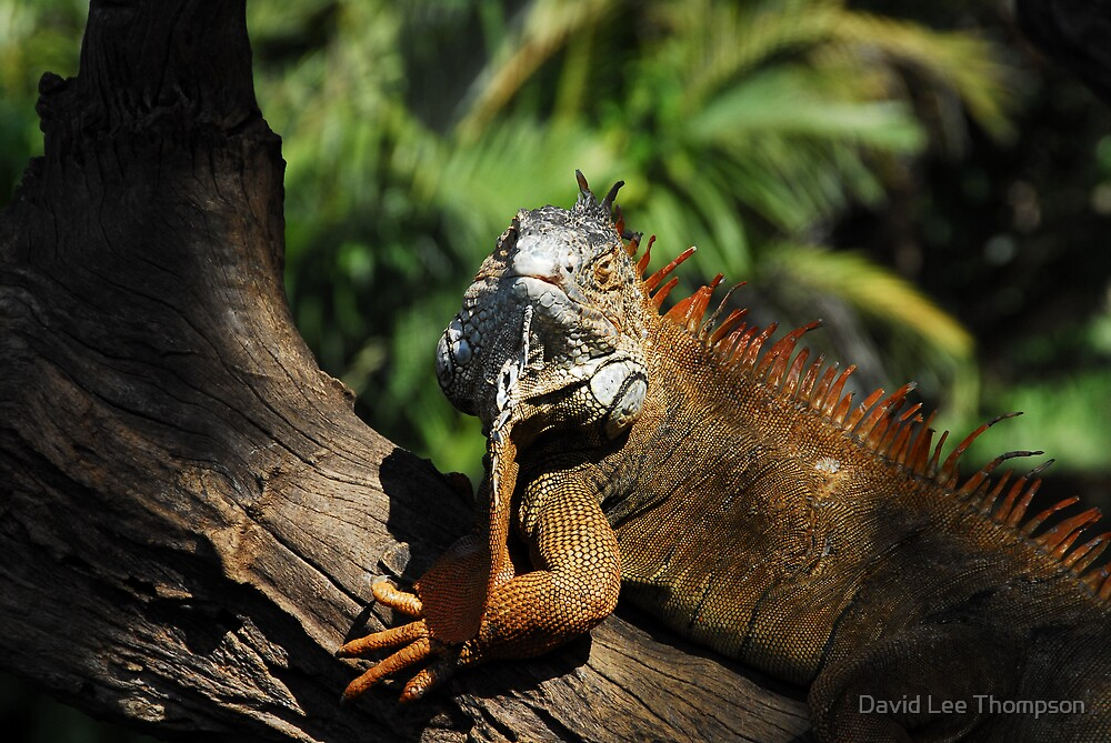 """Red Iguana"" by David Lee Thompson"