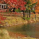 Rural Pond by Sarah McKoy