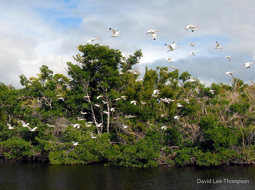 """Cranes in Flight"" by David Lee Thompson"