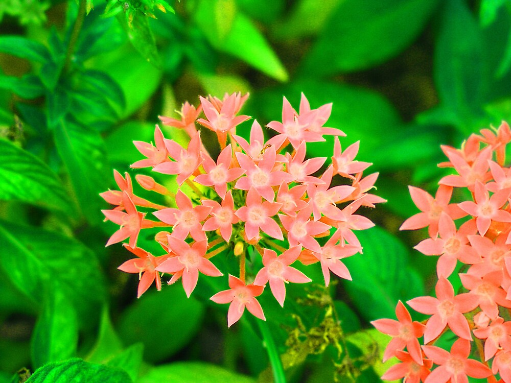 florida flowers by melissa cottrell