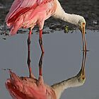 Pink Reflections! by Anthony Goldman