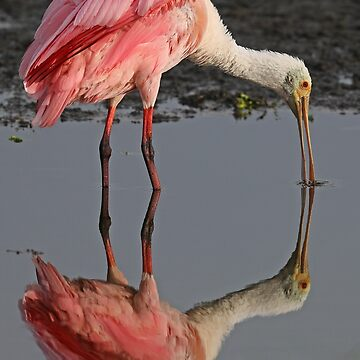 Pink Reflections! by jozi1