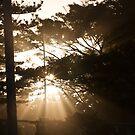 Shine Through 2 by Dave Reid