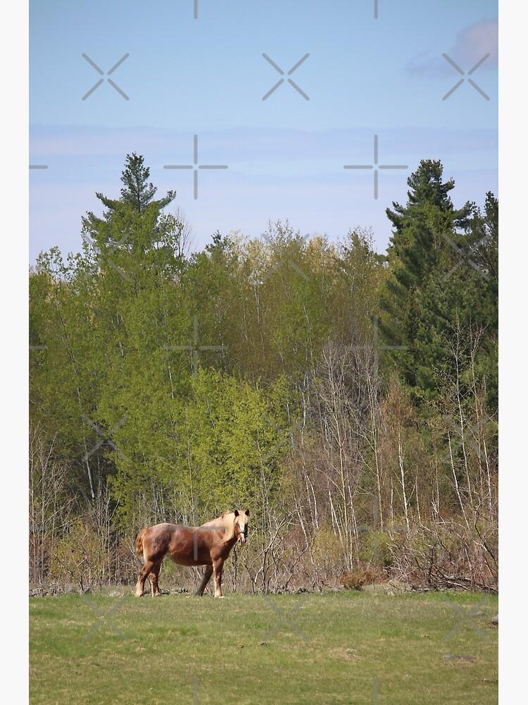 Horse dreams by debfaraday