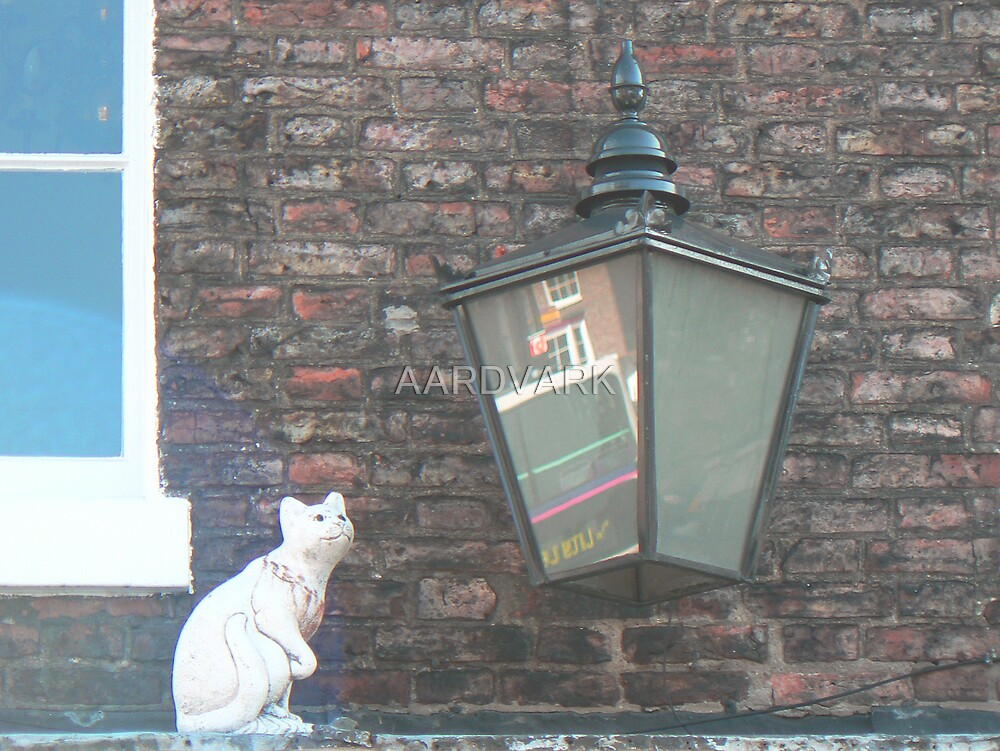 A York Cat by AARDVARK