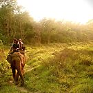 Evening Jungle Ride by Barbara  Brown