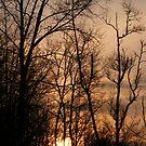 sunrise by rebecca smith