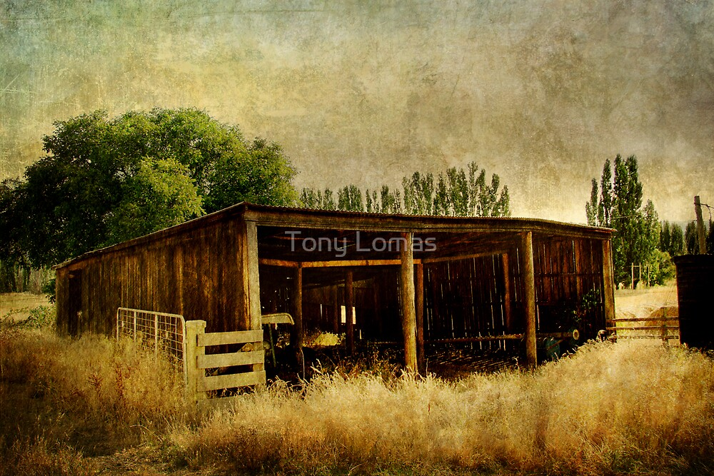 A Stable Environment by Tony Lomas