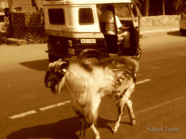 King on the road by Rahul Joshi