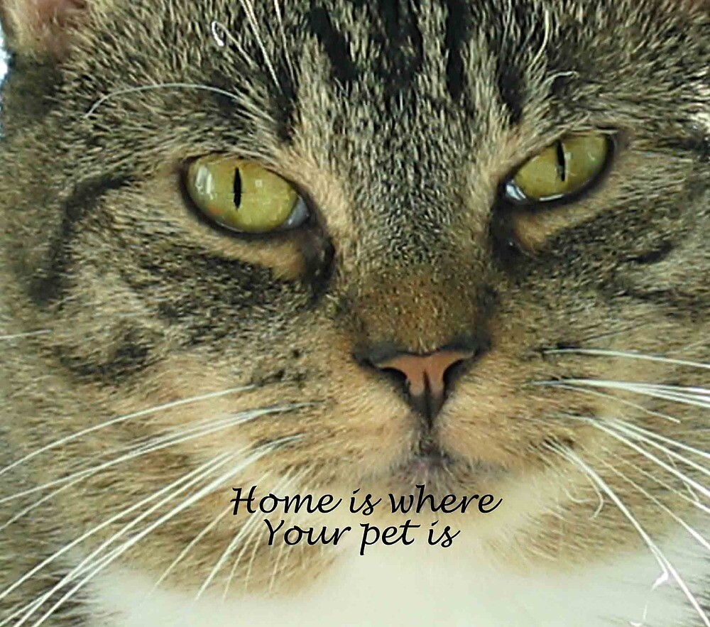 Home is where your pet is by NonnaOriginals