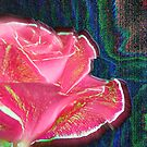 A filtered rose by Jan Clarke