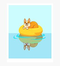 Summer Corgi Photographic Print