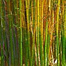 Singing Bamboo Vergelegen by CrismanArt
