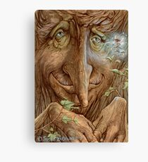 Old Wisebark Canvas Print