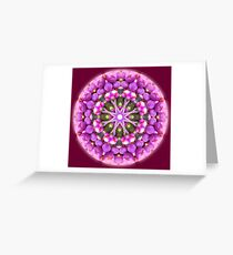 Lilly Pilly Greeting Card