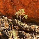 0245 On the rocks by Hans Kawitzki