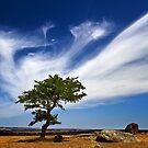 0250 Tree cloud by Hans Kawitzki