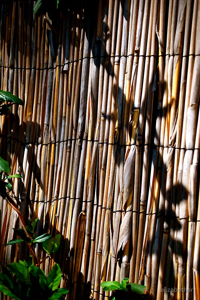 bamboo fence. by elizabether