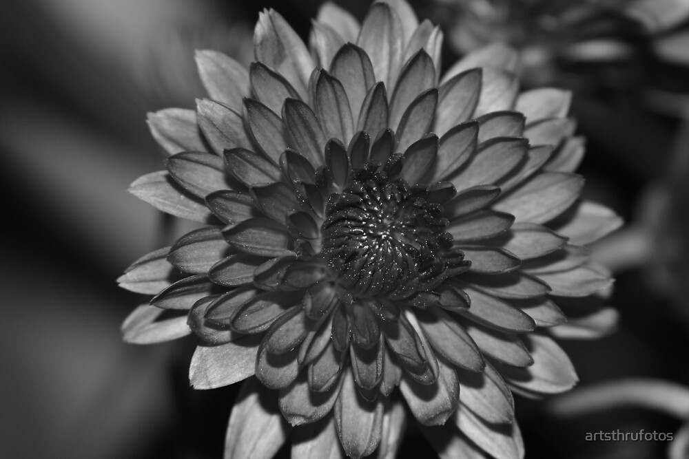 Charcoal Floral by artsthrufotos