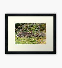 Cute Wildlife Tenderness Framed Print