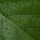 raindrops by Loreto Bautista Jr.