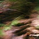 Woodland Floor by John Schneider