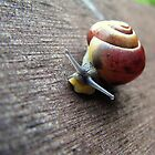 Snail on the gardenseat by Hans Bax