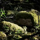 Moss Enrobed Rocks by AntSmith