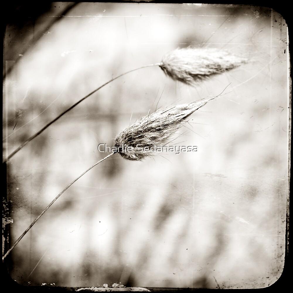 ...whispers... by Charlie Sedanayasa