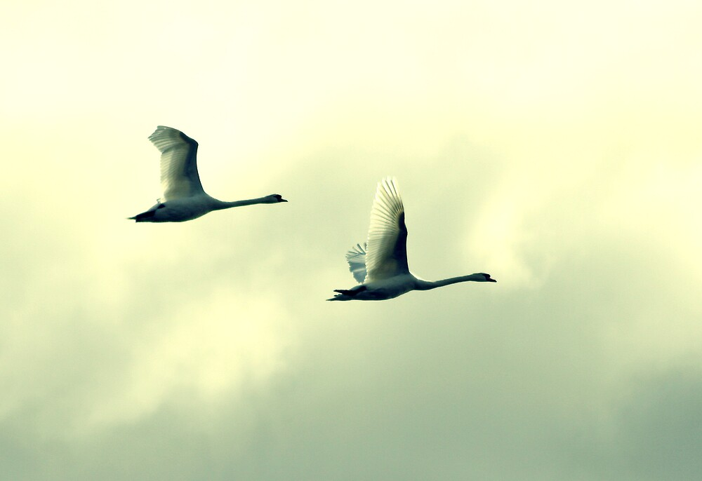 On The Wing by KarenMcWhirter