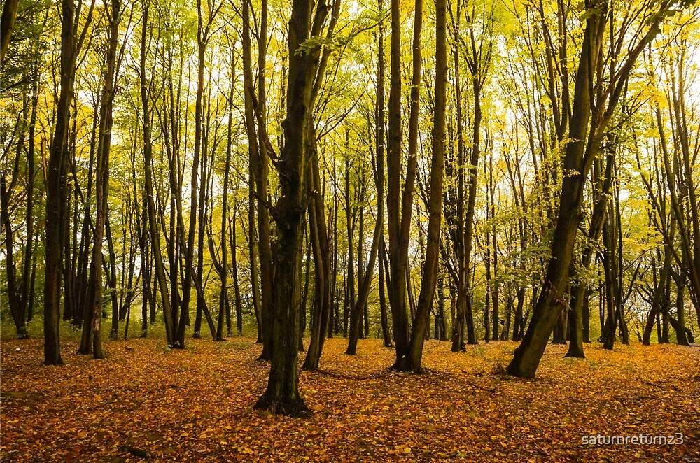Autumn forest by saturnreturnz3