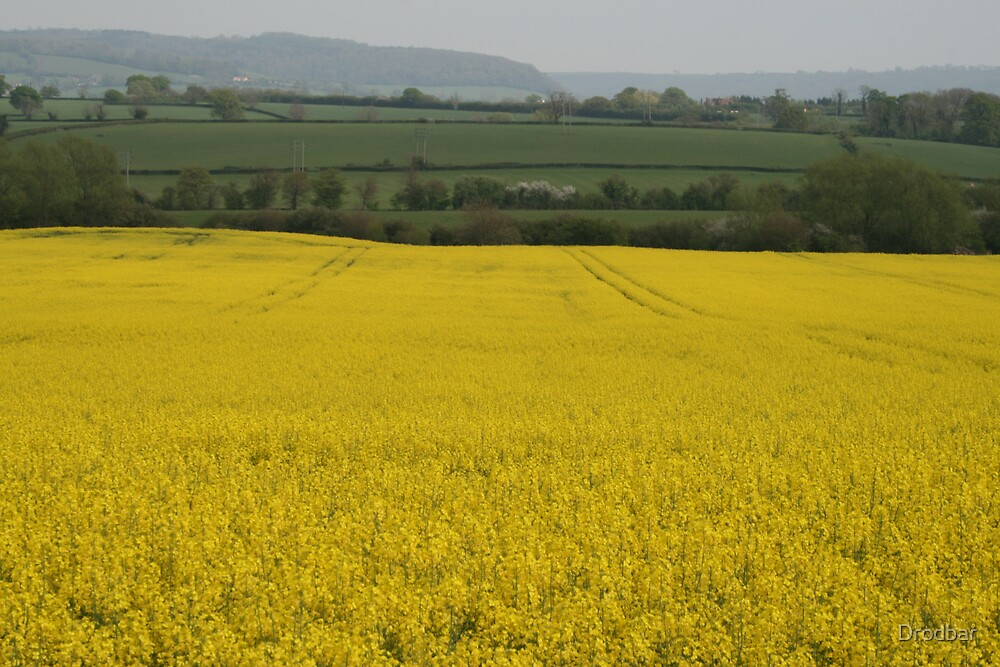 Yellow field by Drodbar