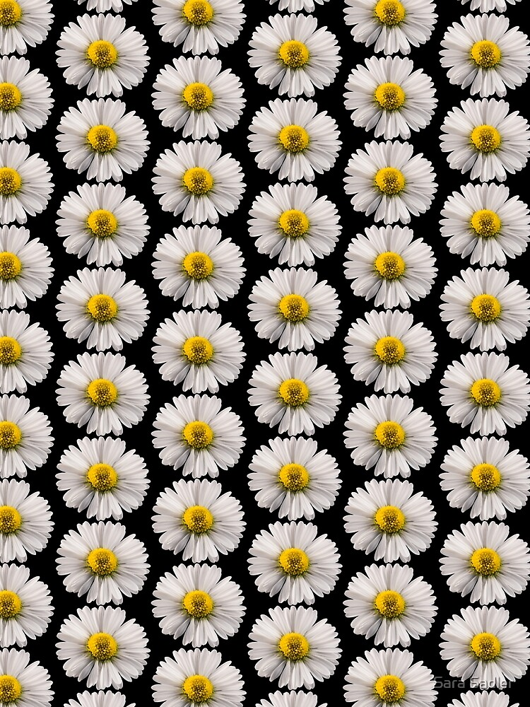 Single Daisy by sadler2121