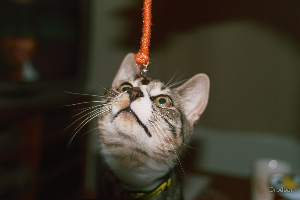 Cat and toy by Drodbar