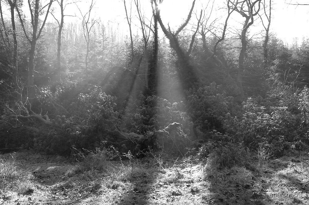 From a local forest here in Exmoor Somerset by marshy69