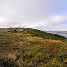 Magestic Tomales Bay by Laura Puglia
