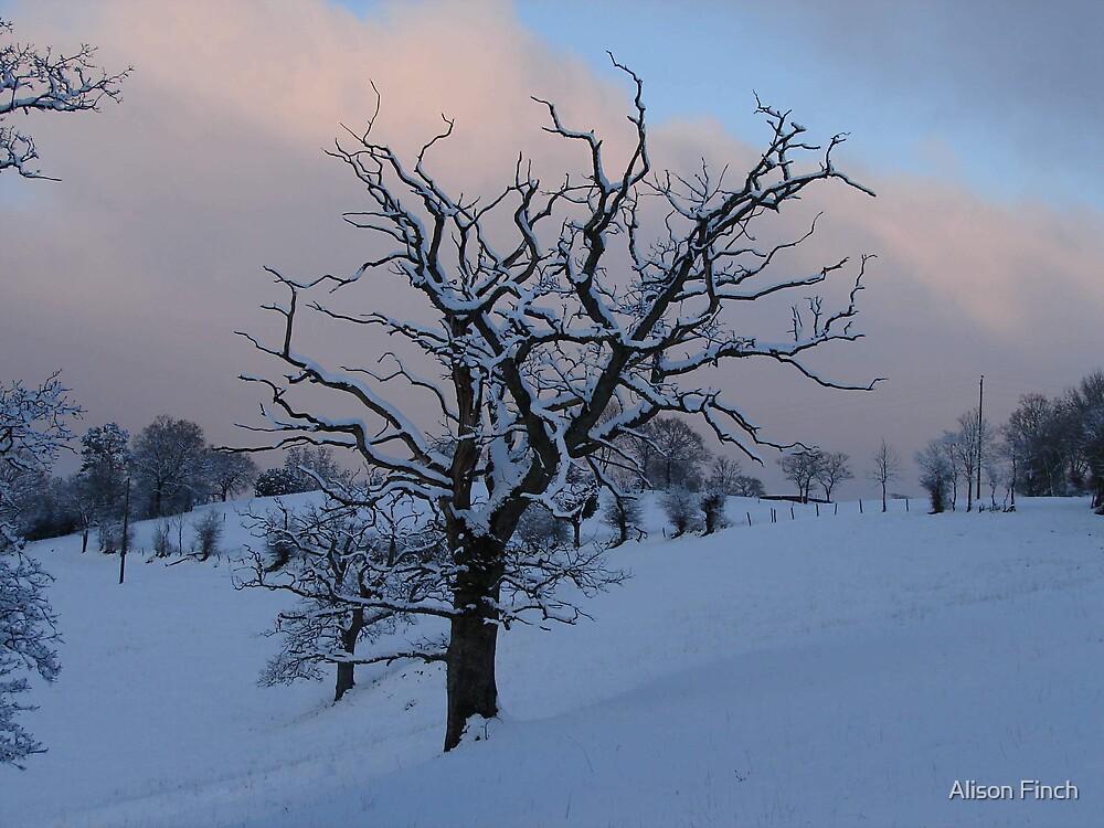 Dead of Winter by Alison Finch