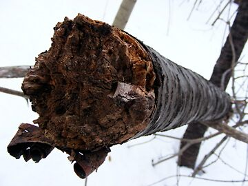 Harsh Winter 2 by K Gilks