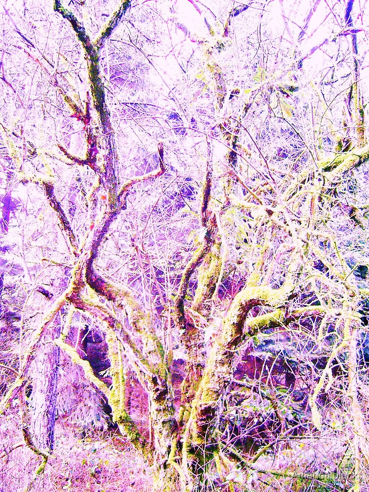 """""""frost the tree by Amanda black"""