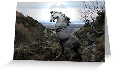 A Wild Stallion by Alan Findlater