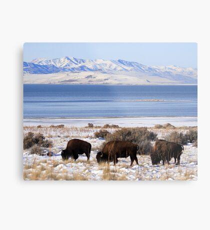 Bison Winter Metal Print
